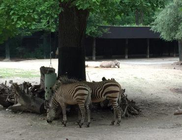 Feierwerk_Blog_Familie_Dschungelpalast_Pfingstferienausflüge_Tierpark_Hellabrunn (2)