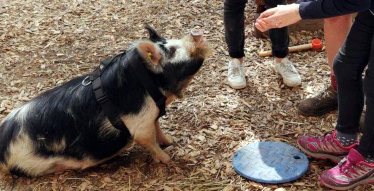 20190619_Kunekune-Schweine Reportage_Tierpark_Hellabrunn_Radio_Feierwerk_München_Blog_credit_Lorenz_Amesbichler